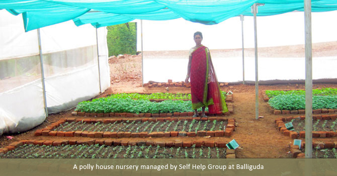 A polly house nursery managed by Self Help Group at Balliguda