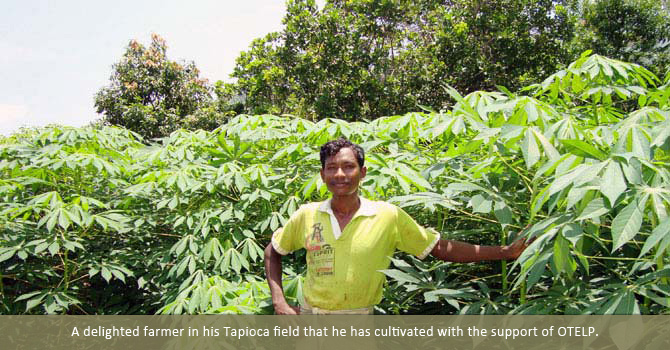 A delighted farmer in his  Tapioca  field that he has cultivated with the support of OTELP