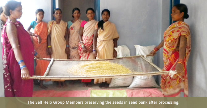 The Self Help Group Members preserving the seeds in seed bank after processing