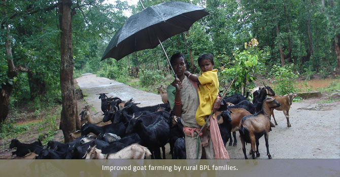 Improved goat farming by rural BPL families