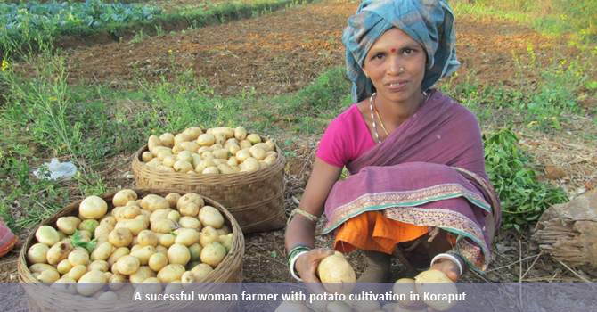 A sucessful woman farmer with potato cultivation in Koraput
