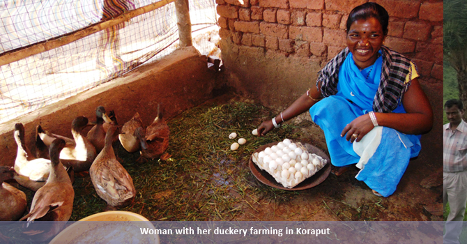 Woman with her duckery farming in Koraput