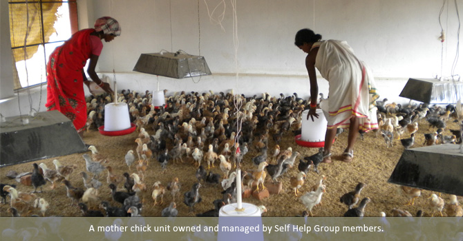 A mother chick unit owned and managed by Self Help Group members