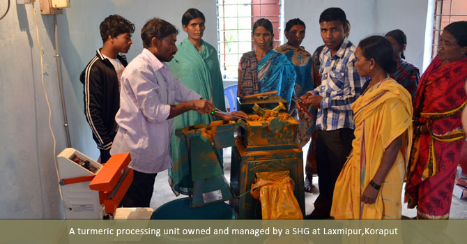 A turmeric processing unit owned and managed by a SHG at Laxmipur,Koraput